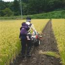 re_№73 稲刈り